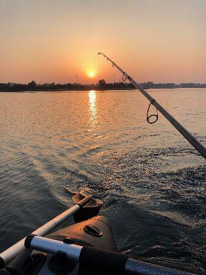 ved solnedgang hugger fiskene